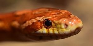 como deberias entender tu sueño con serpientes